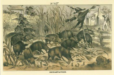 cartoon showing Chinese as pigs devouring a farm